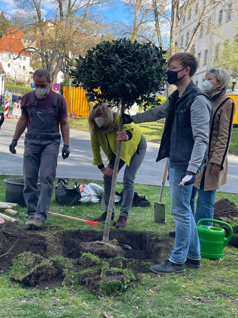 Pirna Tischerplatz 26. April 2021 Baumpflanzaktion GRÜNE